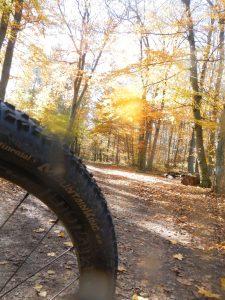 Herbst im Wienerwald aus Mountainbikersicht